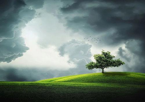 Baum Kraft der Erde