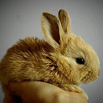 Krafttier Kaninchen