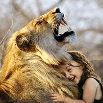 Krafttier Löwin
