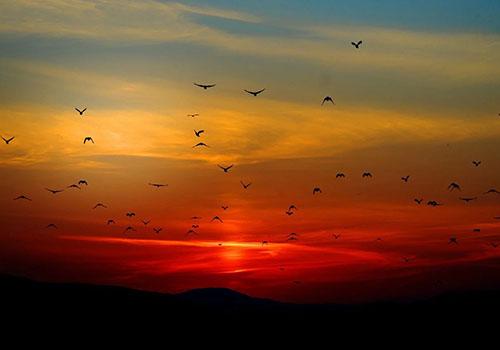 Krafttier vögel