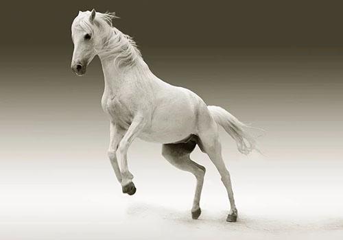 Krafttier Pferd